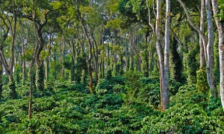 Bangalore Coorg 3 Days Package